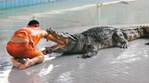 hile : Man puts his hand in the mouth of a crocodile. Pattaya Crocodile Farm. Thailand