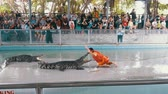 crocodilo : People at extreme crocodile show. Famous Pattaya Crocodile Farm. Thailand. Asia Stock Footage