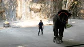 pachyderm : Performance of elephants on the elephant show.