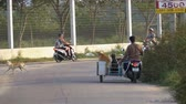 fiel : Motorcycle with dogs in a trailer rides on the road in Asia. Slow Motion