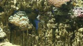 Fish tank  with colorful fish, living corals and beautiful underwater life. Dostupné videozáznamy
