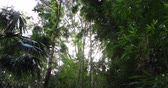 ormanlar : Shot looking up into the tree tops in Manoa Valley on Oahu, Hawaii Stok Video