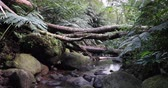 ormanlar : Shot of a jungle stream on Oahu, Hawaii Stok Video