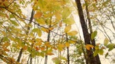 Autumn leafs in the deep forest. Sun rays through the trees. Nature scene composition.
