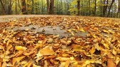 Autumn leaves falling from trees in slow-motion Wideo