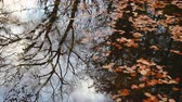 Autumn leaf in river water. Conceptual nature scene. Wideo