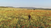Man walking on poppy meadow. Relax scene.