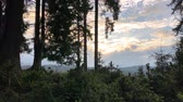 Part of the forest with young and old firs. Dawn over the mountain range.