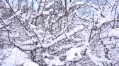 Panorama of the winter forest Стоковые видеозаписи