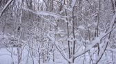 страна чудес : Panorama of the winter forest Стоковые видеозаписи
