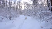 Panorama of the winter forest and the dog Stock Footage