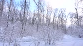 Panorama of the winter forest 動画素材