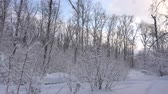 Panorama of the winter forest Stock Footage