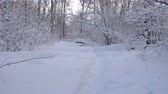 Panorama of the winter forest and the dog Стоковые видеозаписи