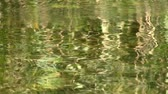 ripples : reflection of green plants in water Stock Footage