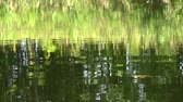 distorsiyon : reflection of green plants in water Stok Video