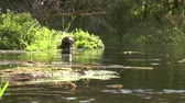 fins : Underwater hunter swims along a small river and dives