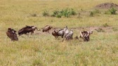 assassinato : Vultures eating a wildebeest carcass.
