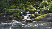Fast mountain river in Altay Stock Footage
