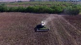 arazi sahibi : Harvester Collects Sunflowers. Aerial Survey Stok Video