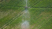 レタス : Irrigation system of fields. Aerial