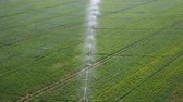 beterraba : Irrigation system of fields. Aerial