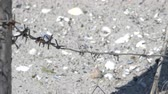 gevangenis : Broken barbed wire fence in the sand