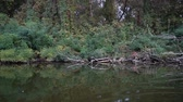 canoe : View of river vegetation from a floating boat boats. Slow motion Stock Footage