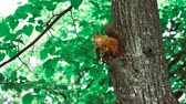 sideview : Squirrel sits on a tree 50 fps