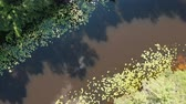 trottola : Drone spinning around river. Drone top view of green river. Beautiful landscape and nature. Truhanov island Filmati Stock