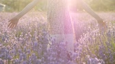 little girl walking in the flowering violet field touching lavender flowers Stok Video