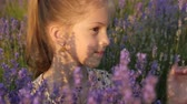 portrait of a pretty little girl sitting in the lavender bushes