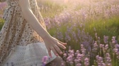 lavanda : close-up of a little girls hand passes through the lavender field Stock Footage
