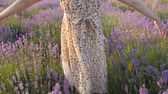 beautiful natural areas for relaxing. body part Rear view legs and hands small girl in the dress goes through flower field at sunset and gently touches flowers Stok Video