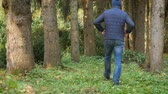 Active healthy Caucasian man in forest. male hiking in woodland park area. healthy lifestyle. panoramic view tall tree Stok Video