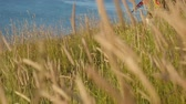 eğlenceli : landscape with high grass on seaside. little boy running along his arms. summer vacation Stok Video