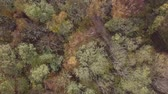 saturated : Flight over tree top above autumn forest. Original untouched LOG format. Stock Footage