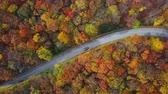saturado : Overhead aerial view of cars on country road in sunny colorful autumn forest.