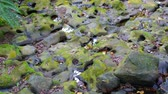 river rapids : river rapids with stone and trees on the shore shot in taipei Stock Footage