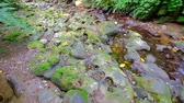 fast river : river rapids with stone and trees on the shore shot in taipei Stock Footage