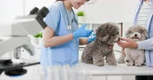 prova : asian young female veterinarian doctor give dog an injection Filmati Stock