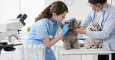 pooch : young female veterinarian doctor examine dog