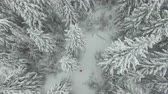 geada : Aerial shot winter forest with woman in red Stock Footage