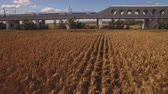 em linha reta : Fast train enters bridge near cultivated corn field