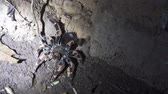 shaky : A huge Tarantula retreats to her hole with lights