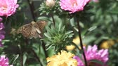 kelebekler : Butterfly leaving flower in super slow motion