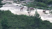 Group of male deers playing and jumping in the firebreak
