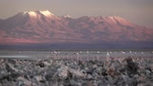 끝 : Spectacular view of salt lake with flamingoes and volcano 무비클립