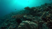 fusilier : Colorful coral reef with healthy hard corals and plenty fish. 4k footage Stock Footage