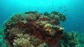 tubbataha : Colorful coral reef with healthy corals and plenty fish. 4k footage Stock Footage